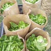 Sustainable Local Food Economy